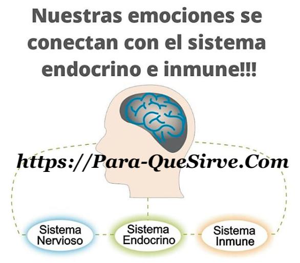Para Qué Sirve El Sistema Endocrino Enfermedades y Glándulas julio ...