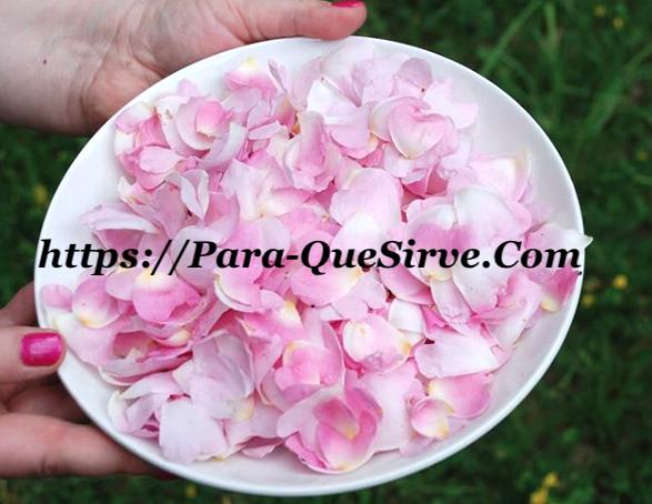 Para Qué Sirven Los Pétalos De Rosa Propiedades Para El Cabello