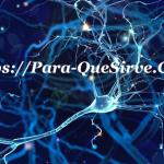 Para Que Sirven Las Neuronas En Cerebro y Corazón