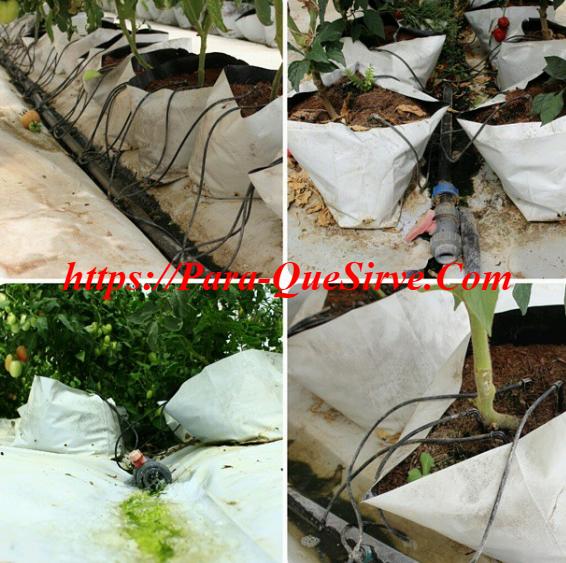 Para qué sirve un sistema de riego por goteo, ventajas y desventajas
