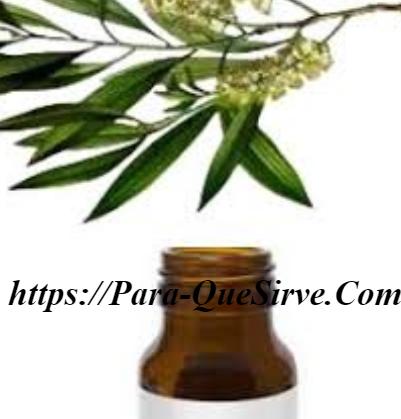 Para Qué Sirve El Aceite De Árbol De Té Para El Cabello