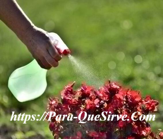 Para Que Sirve El Insecticida Natural Para Plantas Comestibles