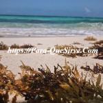 Para Que Sirven Las Algas Marinas Secas Beneficios