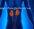 Para Qué Sirve El Sistema Excretor Función Y Órganos Que Lo Componen