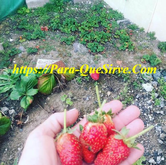 Para qué sirve el abono natural casero para plantas y cítricos 7 ejemplos