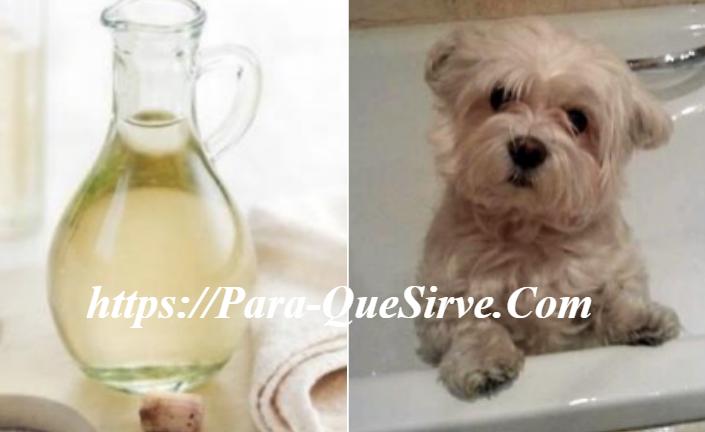 Para Que Sirve Bañar A Mi Perro Con Vinagre Blanco
