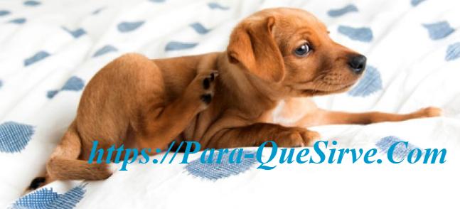 ¿Para Qué Sirve El Tratamiento De Sarna En Perros Casero?