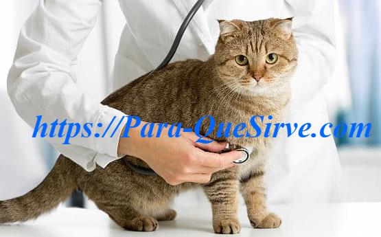 ¿Para Qué Sirve El Tratamiento De Sarna Para Gatos Casero?