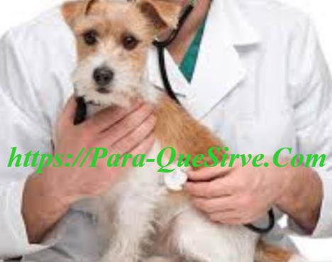 ¿Para Qué Sirve El Tratamiento De Insuficiencia Renal Aguda En Perros?