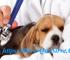 Para Que Sirve El Tratamiento Para Parvovirus Canino En Cachorros