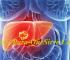 Para Que Sirve El Tratamiento Del Cáncer De Hígado, Síntomas Y Diagnostico