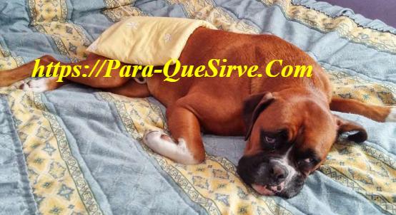 ¿Para Qué Sirve El Tratamiento De Artrosis En Perros?