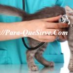 ¿Para Qué Sirve El Tratamiento Para La Inmunodeficiencia Felina?