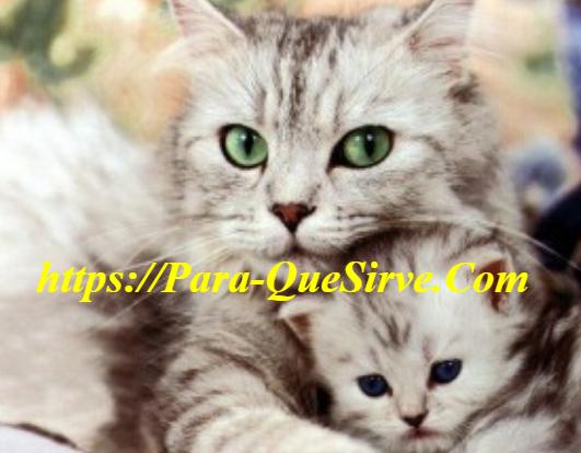 ¿Para Qué Sirve El Tratamiento De Leucemia Felina?