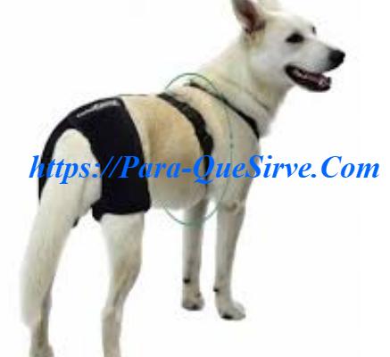 ¿Para Qué Sirve El Tratamiento De Displasia De Cadera En Perros? Y Síntomas.