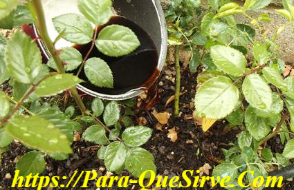 ¿Para Qué Sirven Los Fertilizantes Orgánicos Líquidos?