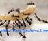 Cómo Eliminar Plagas De Hormigas Para Siempre