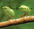 ¿Cómo Eliminar Plagas De Hormigas En Las Plantas?