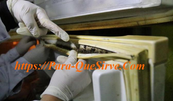 Plagas De Cucarachas En Restaurantes Eliminar
