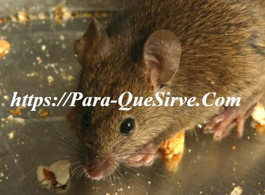 Eliminar Insectos En El Hogar Plagas Domésticas Invasoras.
