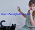 Alergia A Los Gatos Cómo Se Manifiesta Y Se Cura