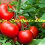 Control Biológico De Plagas Y Enfermedades Del Tomate