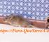 Control De Plagas, Ratas Y Ratones, ¿Cómo Eliminarlas?